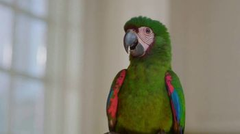 888casino TV Spot, 'Parrot'