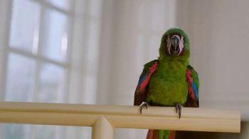 888casino TV Spot, 'Parrot' - Thumbnail 6