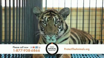 World Animal Protection TV Spot, 'Young Animals' - 51 commercial airings