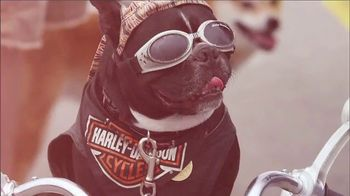 Harley-Davidson TV Spot, 'All for Freedom. Freedom for All.' - Thumbnail 3