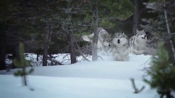Blue Buffalo BLUE Wilderness TV Spot, 'The Hunt Continues' - Thumbnail 5