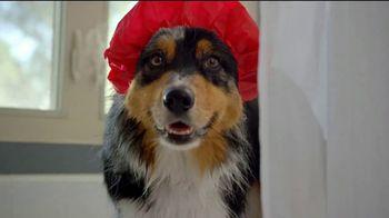 Wienerschnitzel Supercross Dog TV Spot, 'Great Dogs' - Thumbnail 5
