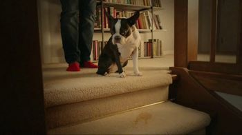 Resolve Pet Expert TV Spot, 'Pet Mess Solved' - Thumbnail 4