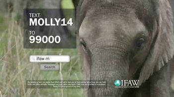 International Fund for Animal Welfare TV Spot, 'Molly the Elephant' - Thumbnail 10