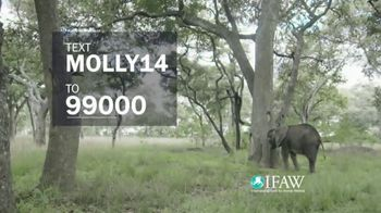 International Fund for Animal Welfare TV Spot, 'Molly the Elephant' - Thumbnail 5