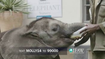 International Fund for Animal Welfare TV Spot, 'Molly the Elephant' - Thumbnail 6