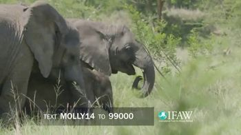 International Fund for Animal Welfare TV Spot, 'Molly the Elephant' - Thumbnail 7