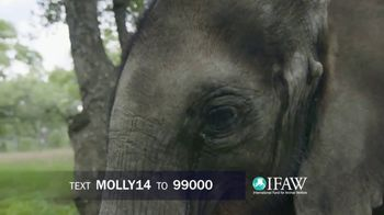 International Fund for Animal Welfare TV Spot, 'Molly the Elephant' - Thumbnail 8
