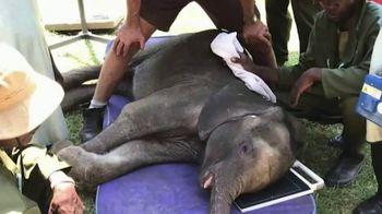 International Fund for Animal Welfare TV Spot, 'Stop the Killing' - Thumbnail 1