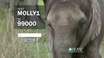 International Fund for Animal Welfare TV Spot, 'Stop the Killing' - Thumbnail 10