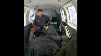 International Fund for Animal Welfare TV Spot, 'Stop the Killing' - Thumbnail 2