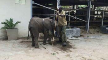 International Fund for Animal Welfare TV Spot, 'Stop the Killing' - Thumbnail 3