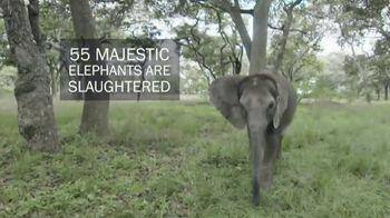 International Fund for Animal Welfare TV Spot, 'Stop the Killing' - Thumbnail 4