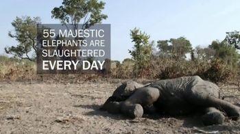 International Fund for Animal Welfare TV Spot, 'Stop the Killing' - Thumbnail 5