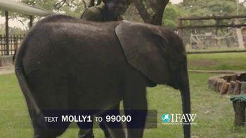 International Fund for Animal Welfare TV Spot, 'Stop the Killing' - Thumbnail 7