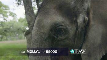 International Fund for Animal Welfare TV Spot, 'Stop the Killing'