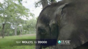 International Fund for Animal Welfare TV Spot, 'Stop the Killing' - Thumbnail 9
