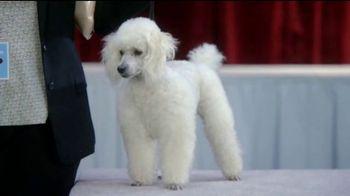 GEICO TV Spot, 'Randy Jackson's Dawg Show' - Thumbnail 1
