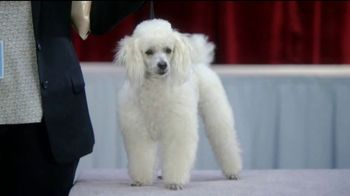 GEICO TV Spot, 'Randy Jackson's Dawg Show' - Thumbnail 2