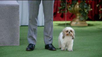 GEICO TV Spot, 'Randy Jackson's Dawg Show' - Thumbnail 3
