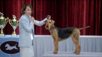 GEICO TV Spot, 'Randy Jackson's Dawg Show' - Thumbnail 5