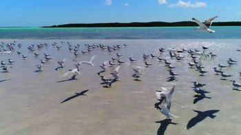 Big Pine and Florida's Lower Keys TV Spot, 'Listen Closely' - Thumbnail 5
