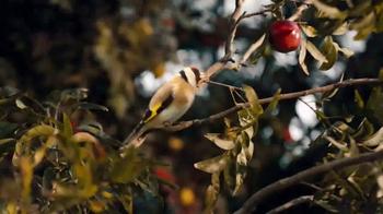 Stella Artois Cidre TV Spot, 'Three Apples' - Thumbnail 4