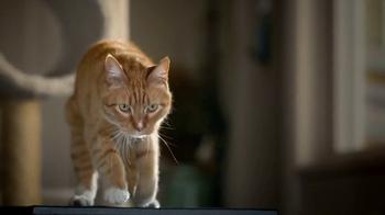 Blue Buffalo BLUE Wilderness Cat Food TV Spot, 'Lynx Hunger: Treats' - Thumbnail 3