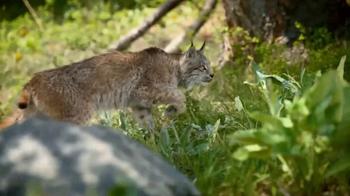 Blue Buffalo BLUE Wilderness Cat Food TV Spot, 'Lynx Hunger: Treats' - Thumbnail 4