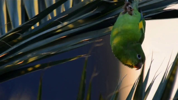 Discover the Palm Beaches TV Spot, 'Birds of a Feather' - Thumbnail 2