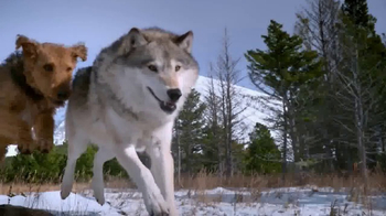 Blue Buffalo BLUE Wilderness TV Spot, 'Wolf Dreams: Regional Recipes' - Thumbnail 4