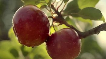 Angry Orchard TV Spot, 'Cider Lessons: Ep. 1: Apples to Apples' - Thumbnail 3