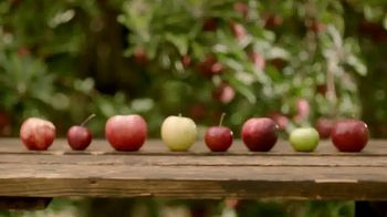 Angry Orchard TV Spot, 'Cider Lessons: Ep. 1: Apples to Apples' - Thumbnail 4