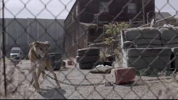 Pedigree TV Spot, 'Rescued' - Thumbnail 1