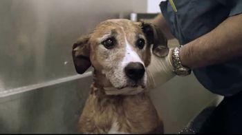 Pedigree TV Spot, 'Rescued' - Thumbnail 4