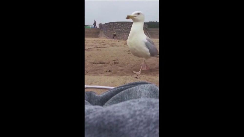 Utrolig Samsung Galaxy S8 TV Commercial, 'Seagull' - iSpot.tv OS-16