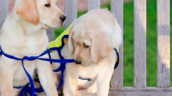 Canine Companions for Independence TV Spot, 'Puppy Raising PSA' - Thumbnail 2