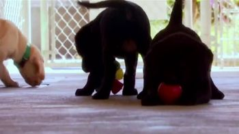 Canine Companions for Independence TV Spot, 'Puppy Raising PSA' - Thumbnail 5
