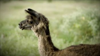 Heifer International TV Spot, 'No Ordinary Gift: Llama'