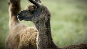 Heifer International TV Spot, 'No Ordinary Gift: Llama' - Thumbnail 5
