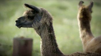 Heifer International TV Spot, 'No Ordinary Gift: Llama' - Thumbnail 6