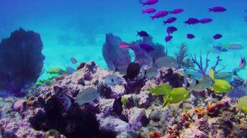 The Florida Keys & Key West TV Spot, 'Back to Abnormal' - Thumbnail 2