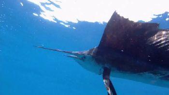 The Florida Keys & Key West TV Spot, 'Back to Abnormal' - Thumbnail 4