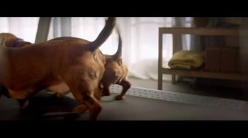 Nature's Recipe TV Spot, 'Three Dachshunds'
