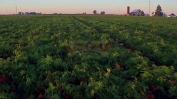 Red Gold Tomatoes TV Spot, 'Red Gold Family and 50 Farm Families' - Thumbnail 1