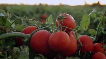 Red Gold Tomatoes TV Spot, 'Red Gold Family and 50 Farm Families' - Thumbnail 2