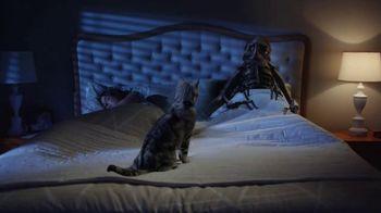 Bayer Advantage II TV Spot, 'Fight the Misery of Fleas' - Thumbnail 5