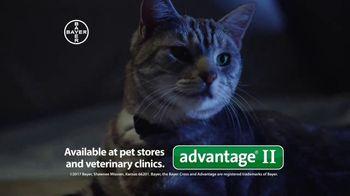 Bayer Advantage II TV Spot, 'Fight the Misery of Fleas' - Thumbnail 8