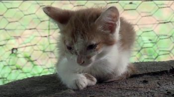 ASPCA TV Spot, 'Save Lives This Summer' - Thumbnail 4