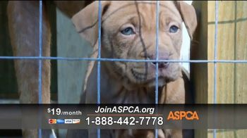 ASPCA TV Spot, 'Save Lives This Summer'